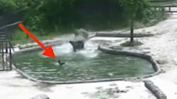 Elephants Team Up To Rescue Calf After It Plunges Into