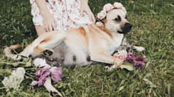 This Dog Had A Dreamier Maternity Shoot Than Most