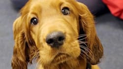 School Adopts Puppy To Help Students Deal With Exam