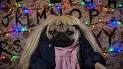 Doug The Pug Scores An Eleven Out Of Ten From 'Stranger Things'