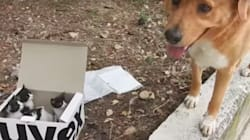 Dog Finds Box Of Tiny Abandoned Kittens And Becomes Their Foster