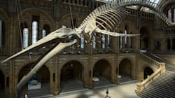 10-Year-Old Kindly Alerts Museum To Mislabeled Dinosaur