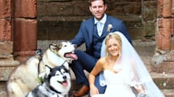 This Couple Chose Their Dogs As Maid Of Honour And Best