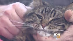 Hero Cat Saves Her Humans From Carbon Monoxide