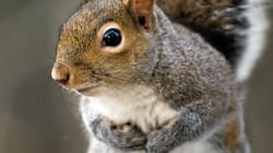 Man Allegedly Shoots Squirrel With Bow And Arrow For 'Giving Him A
