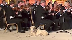 Stray Dog Earns Symphony Of Laughs For Interrupting