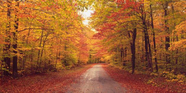 Il y a une explication scientifique à notre amour pour l'automne