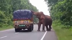 VIDEO: Elefante hambriento 'asalta' camión de