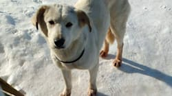 Rescue Dog Shot And Killed After Escaping Plane Onto Winnipeg