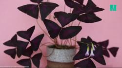 Les plantes bougent, la