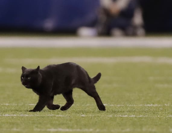 Cowboys introduce black cat as part of the team