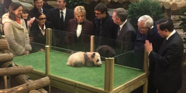 Yuan Meng, le panda de Beauval a reçu son nom devant Brigitte Macron