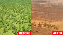 QLD Bulldozes A Gabba's Worth Of Bushland Every 3 Minutes And It Could Get Worse After The