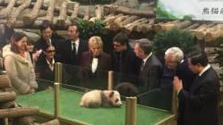 On connaît le nom du bébé panda de Beauval, baptisé devant Brigitte