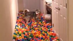 Ce chien ne sait plus où donner de la tête dans cette piscine de 5400