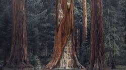 Ces architectes veulent transformer des troncs d'arbres vides en