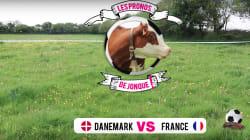 La France va battre le Danemark, ces animaux l'ont (encore)