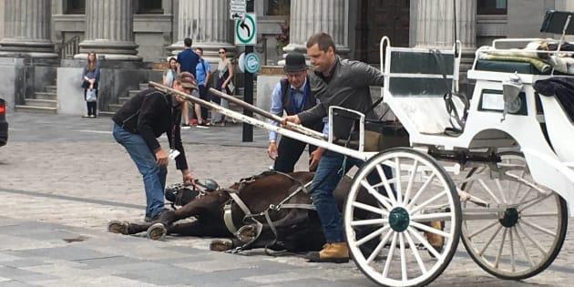 Un cheval s'effondre à Montréal — Calèche