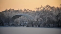 Ces arbres enveloppés par la glace sont