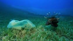 Un sac plastique a été retrouvé dans l'endroit le plus profond sur