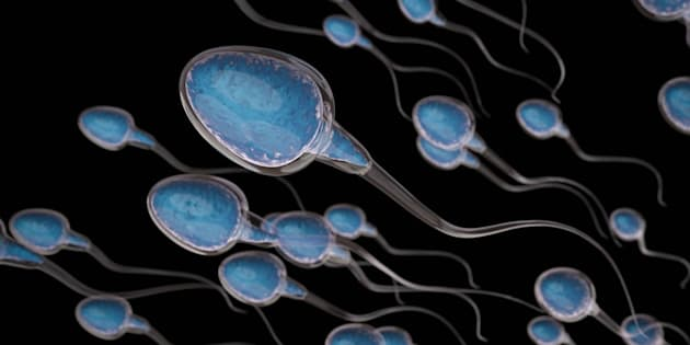 """It is entirely possible for sperm counts to be declining ... without their being a corresponding decrease in male fertility,"" says University of Sussex professor Fiona Mathews."