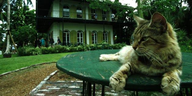 Um dos gatos descansa na mesa do jardim que um dia foi do autor Ernest Hemingway.
