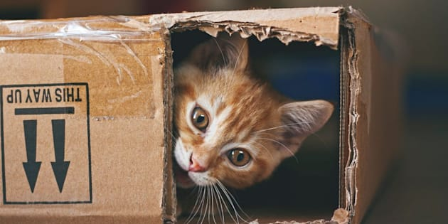 Could this cute cat beplotting against you?