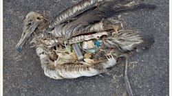 This Image Shows The Tragedy Of Mass Consumption – But Change Is