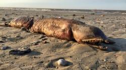 謎の生物が海岸に打ち上げられる。「エイリアン?」とTwitterざわつく