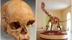 El Museo Nacional de Brasil te hace un tour virtual, así era antes del