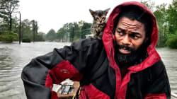 Survivor, el gatito que se aferró a la vida al cuello de su