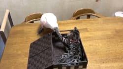 Face à un chat impoli, ce perroquet a une méthode