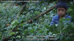 Café: 0,01$ por taza para los caficultores; miles de millones de dólares para las