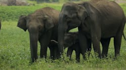 Human Population Growth Is The Greatest Threat To Asian Elephants'