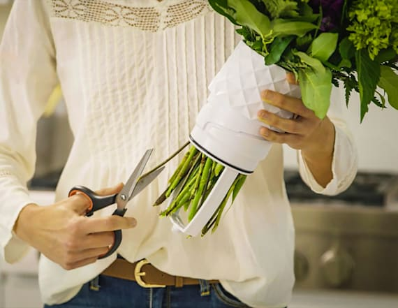 Genius vase helps lengthen the life of your flowers