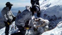 EN FOTOS: Así recuperaron los cuerpos enterrados en el Pico de