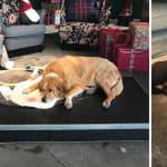 Pour éviter le froid, ces chiens abandonnés trouvent refuge dans un