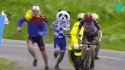 Ce panda n'aurait pas dû poursuivre un coureur au Critérium du