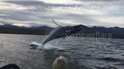 'Flying' Humpback Whale Impresses Kids During Birthday