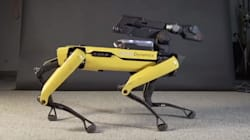 El perro robot que baila como Michael