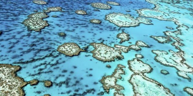 Du vinaigre suffit pour tuer une étoile de mer qui est en partie responsable de la disparition de la Grande barrière de corail.