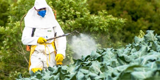 Regulamentação de agrotóxicos: O Brasil na contramão do mundo