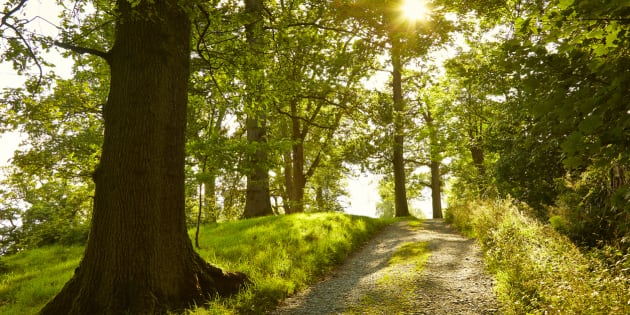 Sunny tranquil footpath through green forest, Lake District, England