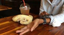 Prendre son café au milieu de reptiles, ça vous