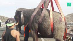 Un éléphant meurt après un accident sur une autoroute en