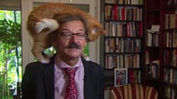Il gatto irrompe durante l'intervista: la reazione del politologo è