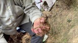 Cet homme récolte le miel à mains