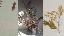 Pour Noël, les fleurs séchées et les herbiers sont des cadeaux