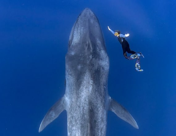 Stunning pic shows diver's encounter with blue whale