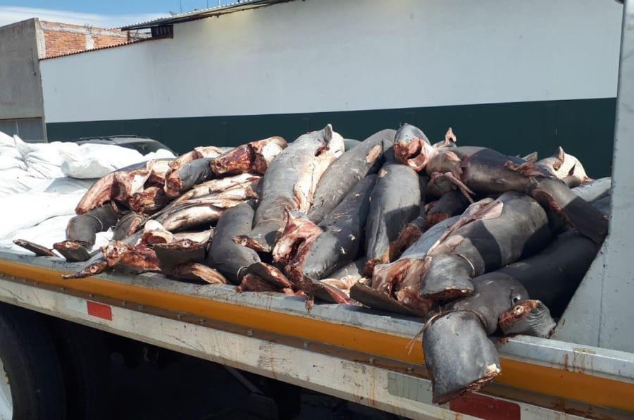 Fotografía del 23 de enero de 2018 que muestra restos de tiburones encontrados en una carretera en el municipio de la Piedad Michoacán. Los cadáveres de tiburones de diversos tamaños fueron abandonados en una carretera del suroccidental estado mexicano de Michoacán por presuntos asaltantes de camiones de carga, de acuerdo con la Procuraduría General de la República.